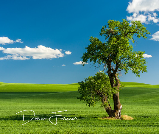Mouse Pad - Lone Tree 2