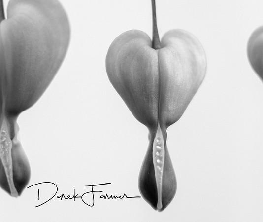Mouse Pad - Bleeding Hearts - Black & White