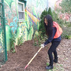 Evan Brandt -- Digital First Media<br /> The mural at the Mosaic Community Garden made for a colorful backdrop for Electra Yao, 16, as she spread mulch on PottstownCARES Day Thursday.