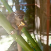 2014-11-Lemur-Zoo-High-11
