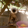 2014-11-Lemur-Zoo-High-20