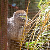 2014-11-Lemur-Zoo-High-10