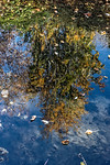 Upside Down Tree Water Reflection