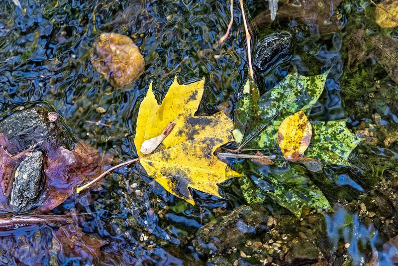 Large Yellow Leaf, Small Yellpw Leaf, Large Green Leaf