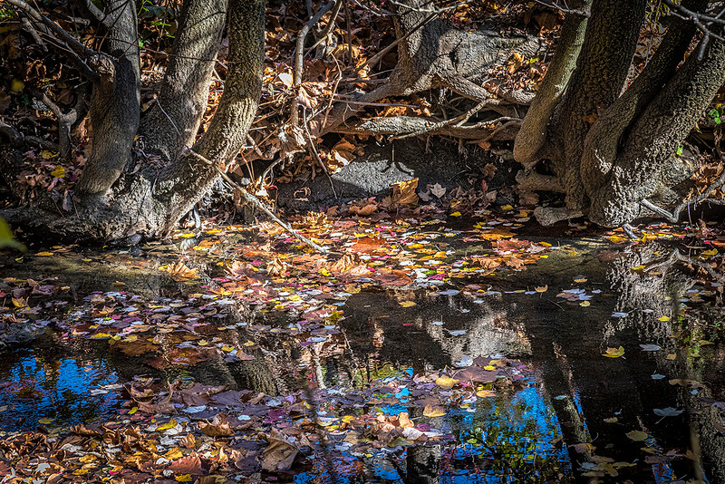 Floating Leaves, Creek Bank, Tree Roots