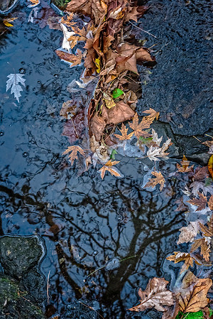 A Line of Leaves, Creek, Tree Shadow
