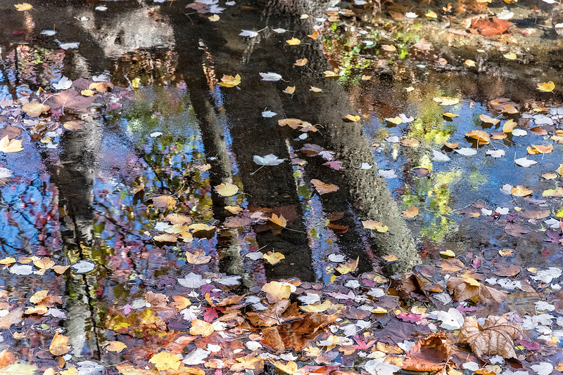 Floating Tree Trunk Reflections