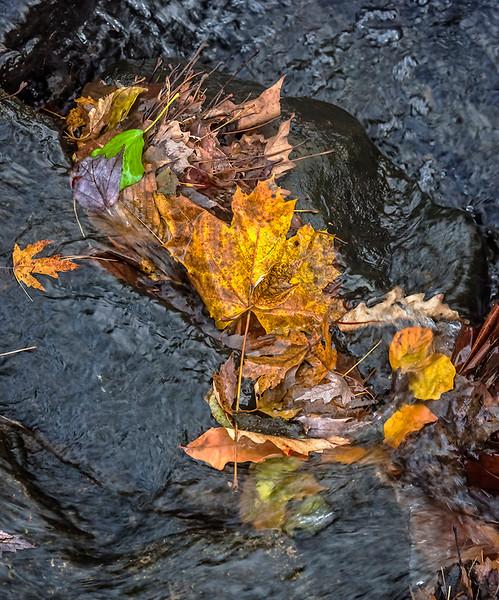 Leaves, Running Water