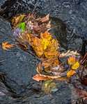 Leaves, Running Water