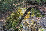 Tree Trunk, Leaves, Water Reflection