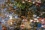 Leaves, Tree REflection, Creek Bottom