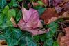 Pink Leaves, Orange Leaves, Green Leaves (2017)