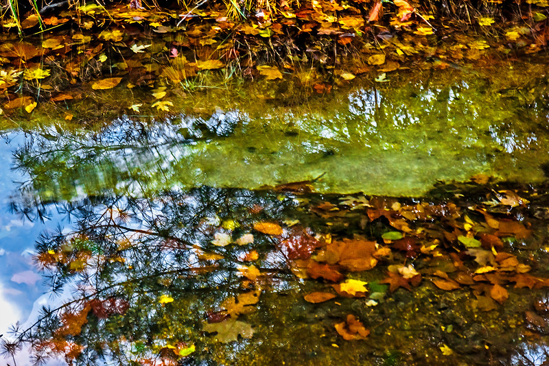 Floating Leaves, Tree Water Reflection (2017)