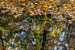 Leaves, Tree Creek Reflections