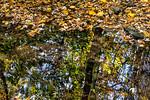Leaves, Tree Creek Reflections