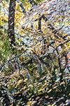 Leaves, Tree Branches, Water Reflection