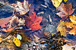 Leaves, Rocks, Creek's Edge