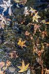 Leaves, Creek, Light