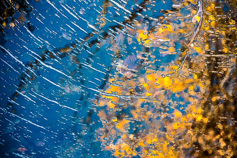 Creek Reflections & Motion