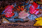 Fallen Branch, Colorful Wet Leaves
