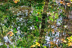 Patterned Tree Water Reflections