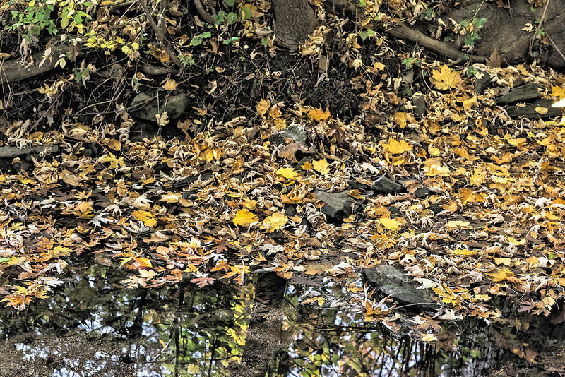 Bank, Leaves, Reflections