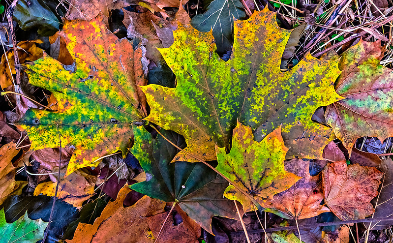 Speckled Yellow Green Leaves