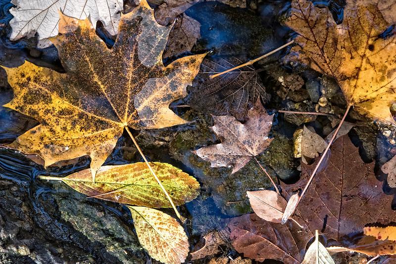 Leaves on Rocks in Water