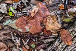 Orange Leaves, Fallen Tree (2017)