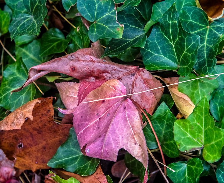 Pink Leaves Surrounded