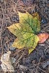 Green Leaf on Straw