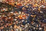 F;oating Leaves, Open Passage, Creek