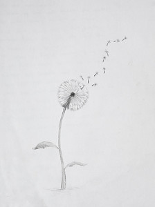 Oliver_drawings -0062