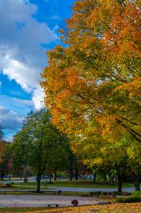 Merrimack College Fall Foliage III