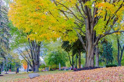 Merrimack College Fall Foliage I