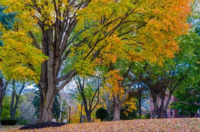 Merrimack College Fall Foliage II