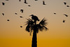 Great Blue Heron Silhouette at Dawn
