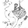 Bobines d'oignon