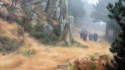 11-11-2008 - Col du Minier (Aigoual)