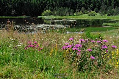 11-07-2006 Entre le lac Pavin et le lac de Montcineyre