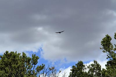 Raven-001