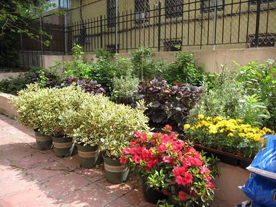 Volunteer Spring Planting