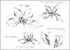 Imaginary Botanicals:  Botanical Study 1