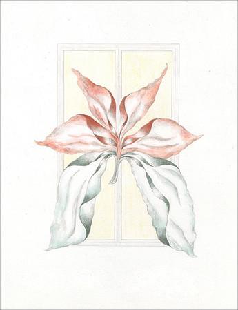 Quadratus Botanical 7