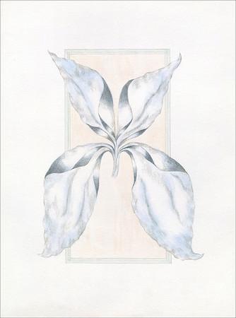 Quadratus Botanical 14