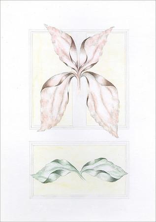 Quadratus Botanical 17