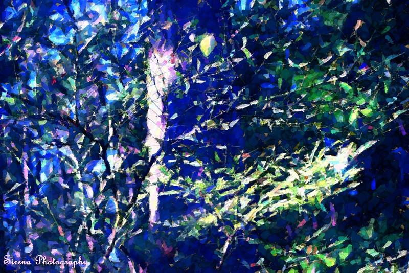 Fragmented Fauna