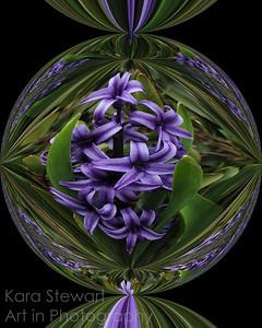 Hyacinth Candy