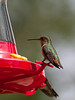 Hungry Hungry Hummers