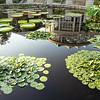 Fuqua Conservatory